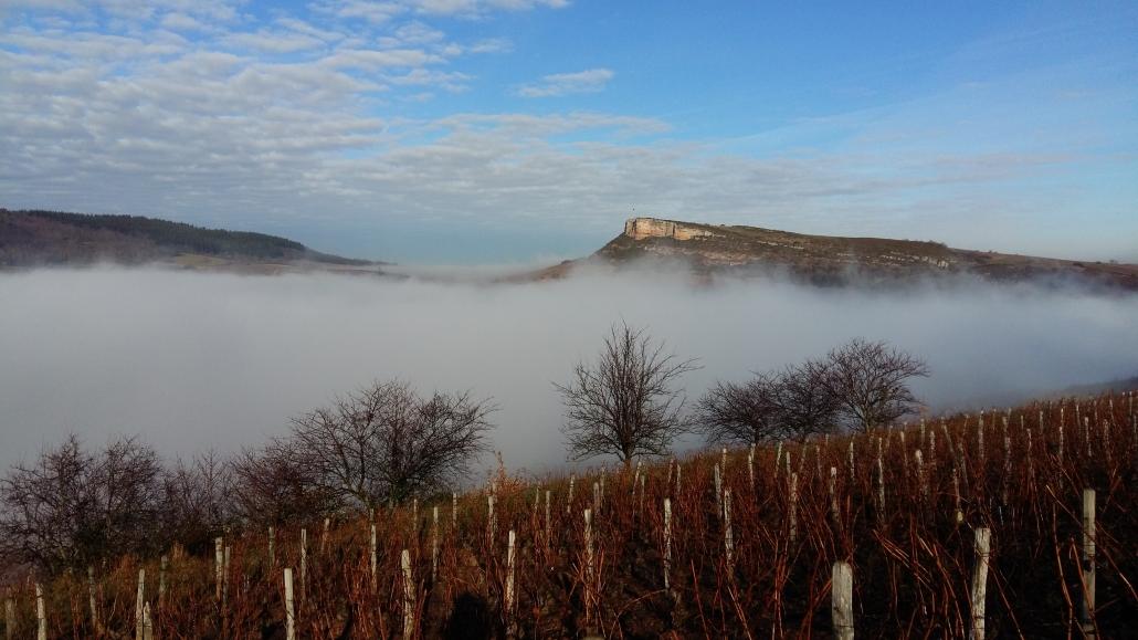 brouillard d'hiver Vignes Roche de Vergisson en Bourgogne